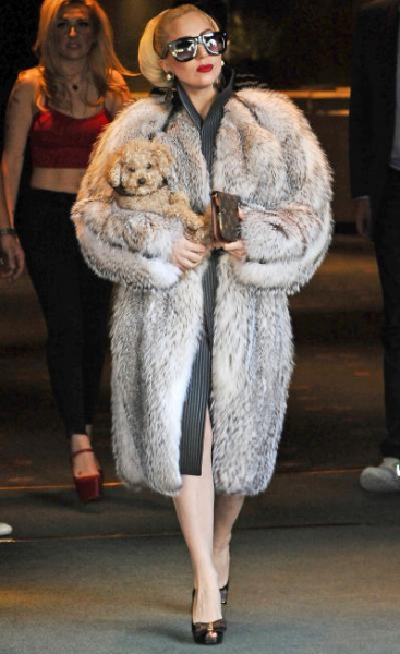 lady-gaga-fur_399x652