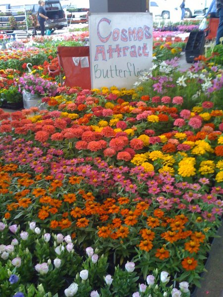 Flowers at Eastern Market